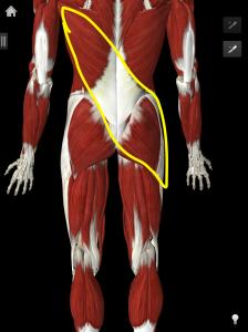 posterior oblique sling