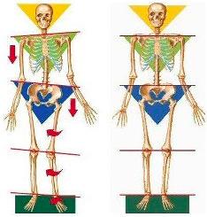 skeletal-alignment