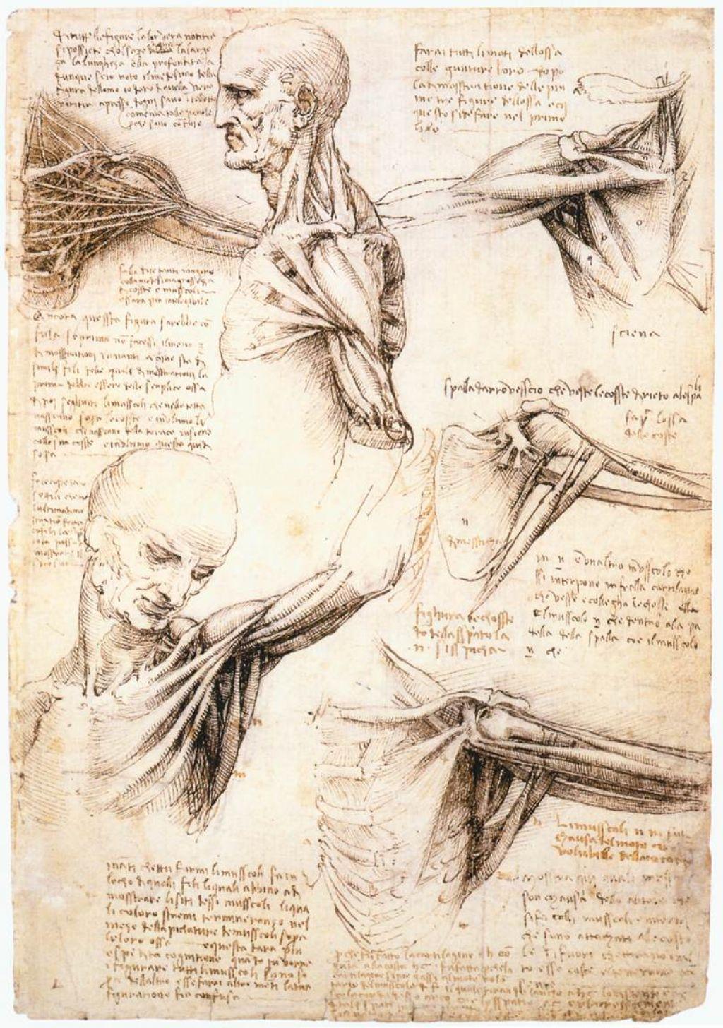 Da vinci anatomy